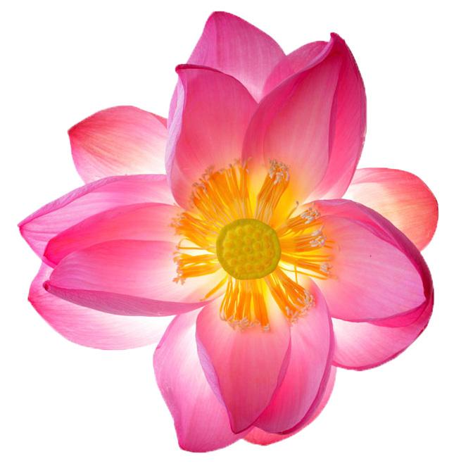 mindfulness_meditation_2